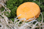 Review: Lush Shampoo Bar | Brazilliant